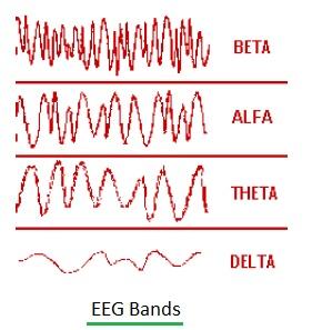 EEG Bands